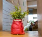Planta de la hierba verde en pote del vintage en fondo del verde menta del frente de la tabla Artículo de adornamiento interior E Fotografía de archivo