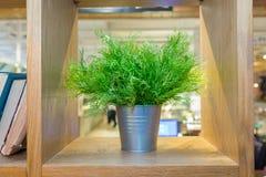 Planta de la hierba verde en pote del vintage en fondo del verde menta del frente de la tabla Artículo de adornamiento interior E Fotos de archivo libres de regalías
