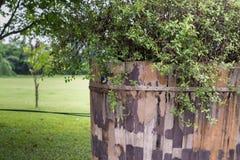 Planta de la hierba verde y de la hoja sobre la cerca de madera foto de archivo libre de regalías