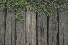 Planta de la hoja sobre la cerca de madera Imagen de archivo libre de regalías