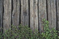 Planta de la hoja sobre la cerca de madera Foto de archivo libre de regalías