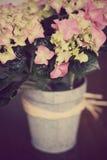 Planta de la hortensia en cubo del estilo del vintage Imagen de archivo