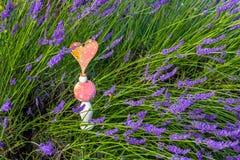 Planta de la lavanda en el jardín Fotografía de archivo libre de regalías