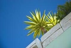Planta de la palma en travesaño de la ventana foto de archivo libre de regalías