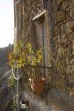 Planta de la pimienta de chile (pimiento spp) en un pequeño balcón Fotografía de archivo