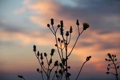 Planta de la puesta del sol Foto de archivo libre de regalías