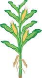 Planta de maíz ilustración del vector