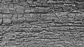 Planta de madera del fondo Imagen de archivo
