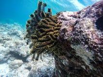 Planta de mar Fotos de archivo