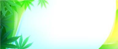 Planta de marijuana e cannabis em fundos verdes imagens de stock royalty free