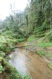 Planta de Nueva Guinea Impatiens Imágenes de archivo libres de regalías