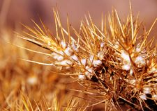 Planta de oro Foto de archivo libre de regalías