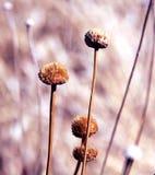 Planta de oro Foto de archivo