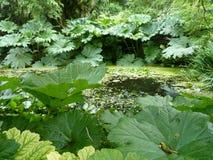 Planta de pantano del gunnera de la hoja de Hugh Imagenes de archivo