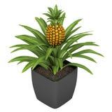 Planta de piña fructífera Foto de archivo libre de regalías