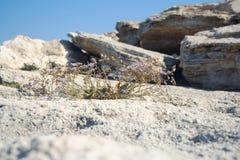 Planta de piedra Imagen de archivo libre de regalías