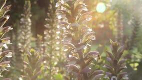 Planta de polinización de la abeja por la tarde metrajes