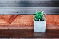 Planta de potenciômetro Echeveria no fundo de madeira da textura Imagens de Stock Royalty Free