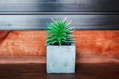Planta de potenciômetro Echeveria no fundo de madeira da textura Imagens de Stock