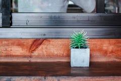 Planta de potenciômetro Echeveria no fundo de madeira da textura Foto de Stock Royalty Free