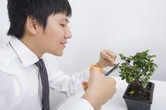 Planta de potenciômetro de poda do homem de negócios adulto meados de feliz no escritório Imagens de Stock