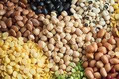 Planta de proteína fotos de stock royalty free