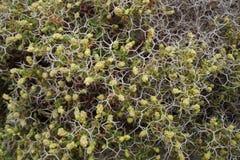 Planta de punta Bush Imagenes de archivo