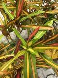 Planta de Rasta Imagen de archivo