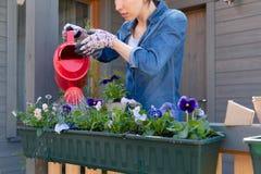 Planta de riego de la flor de la mujer usando la regadera roja en envase en jardín del balcón de la terraza fotos de archivo libres de regalías