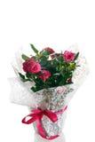 Planta de Rose con el embalaje con el arco rojo Fotos de archivo libres de regalías
