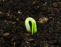 Planta de semillero Fotos de archivo