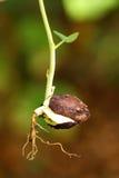 Planta de semillero Fotografía de archivo