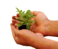 Planta de semillero Foto de archivo libre de regalías