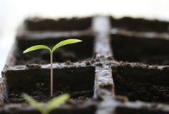 Planta de semillero fotografía de archivo libre de regalías
