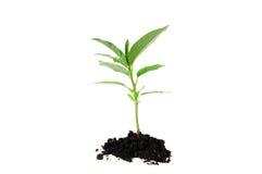 Planta de semillero Foto de archivo