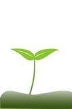 Planta de semillero Imágenes de archivo libres de regalías