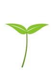 Planta de semillero Imagen de archivo