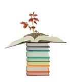 Planta de semillero crecida de la pila de libros Imagenes de archivo