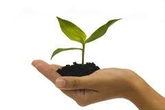 Planta de semillero de la explotación agrícola de la mano Foto de archivo libre de regalías