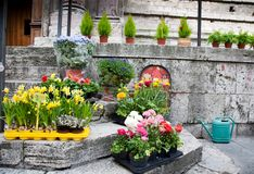 Planta de semillero de la flor en la calle Imagen de archivo libre de regalías