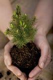 Planta de semillero del árbol Foto de archivo