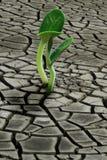 Planta de semillero del suelo seco Imágenes de archivo libres de regalías