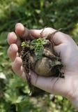 Planta de semillero a disposición Imagenes de archivo