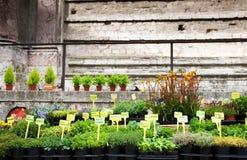 Planta de semillero para la venta en la calle Fotos de archivo