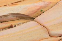 Planta de semillero que crece en piedra arenisca Foto de archivo libre de regalías