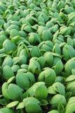 Planta de semillero verde Imagenes de archivo