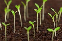 Planta de semillero verde Imágenes de archivo libres de regalías
