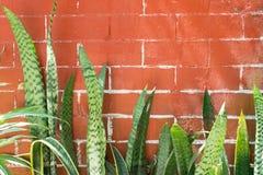 Planta de serpiente en la parte inferior de una pared de ladrillo marrón Imagen de archivo