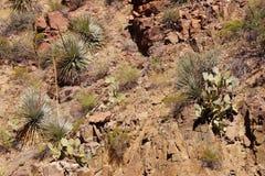 Planta de siglo (agavo americana) Fotografía de archivo