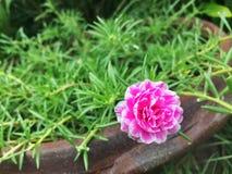 Planta de Sun Foto de Stock